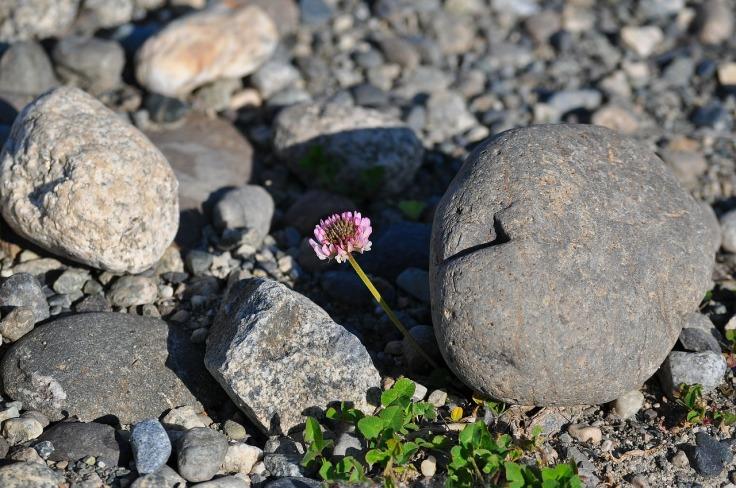 flower-429645_1280