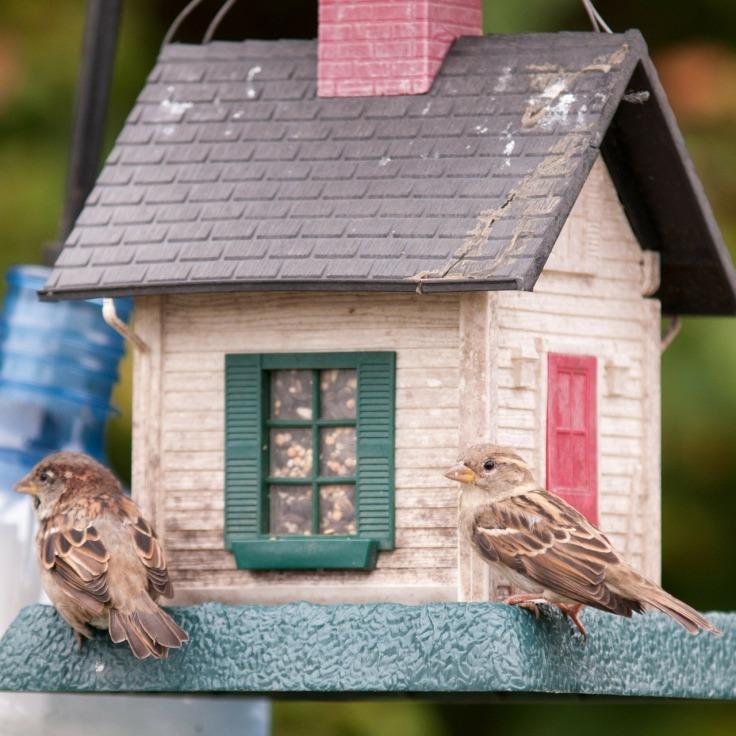 birds-314264_1280