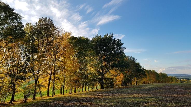 autumn-2541610_1280