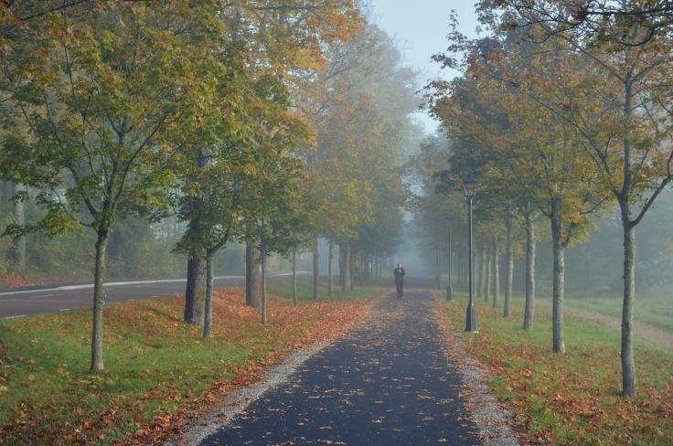 pathway-2532588_1280